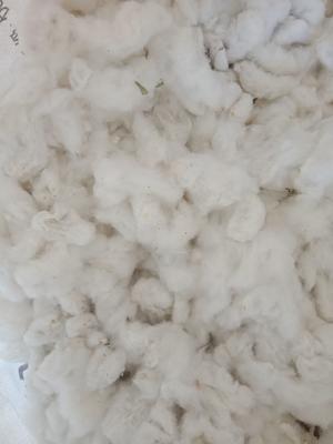 新疆维吾尔自治区克拉玛依市克拉玛依区新疆棉花