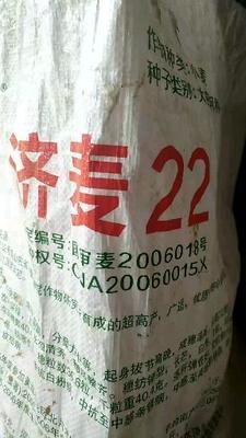 山东省济宁市嘉祥县济麦22