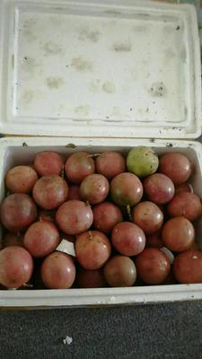 广西壮族自治区玉林市北流市紫红色百香果 统货