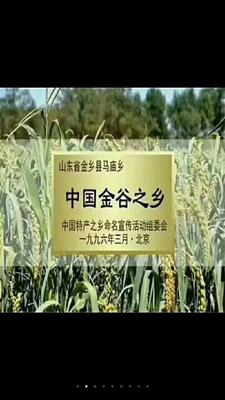 山东省济宁市金乡县金谷小米