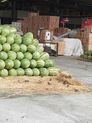重庆江津区宁夏西瓜 有籽 2茬 10成熟 10斤打底