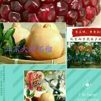 陕西省西安市临潼区临潼石榴 0.8 - 1斤