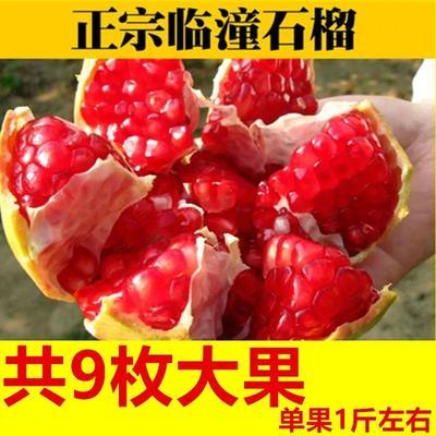 陕西省西安市临潼区突尼斯软籽石榴 0.8 - 1斤