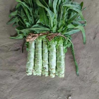 河北省保定市定州市青皮尖叶莴苣 20~24cm 1.0~1.5斤