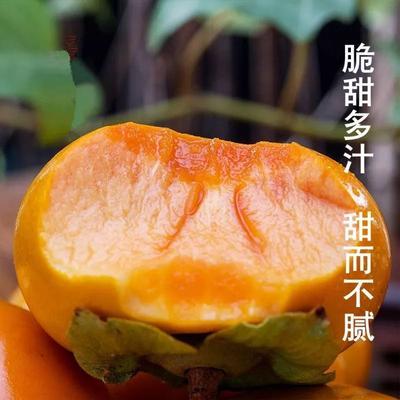 这是一张关于脆柿 2 - 3两以上的产品图片