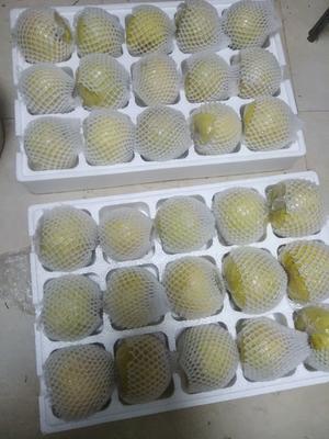 这是一张关于砀山酥梨 300-350g 75mm以上的产品图片