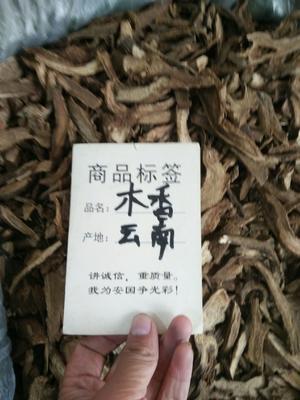 河北省保定市安国市木香