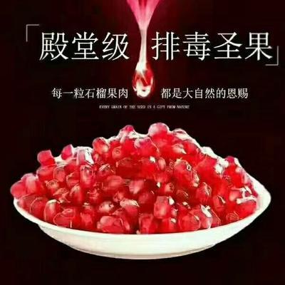 广西壮族自治区钦州市钦北区突尼斯软籽石榴 0.8 - 1斤