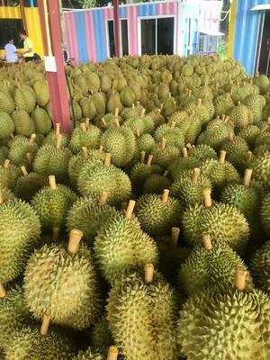 广西壮族自治区崇左市凭祥市泰国金枕榴莲 80 - 90%以上 3 - 4公斤