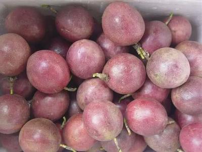 广西壮族自治区贺州市钟山县紫红色百香果 50 - 60克