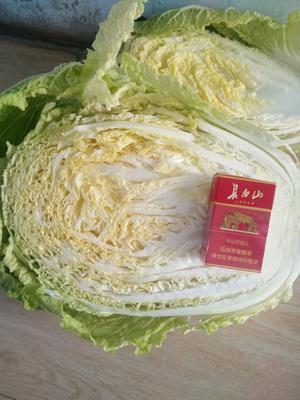 吉林省四平市梨树县黄心大白菜 3~6斤 净菜