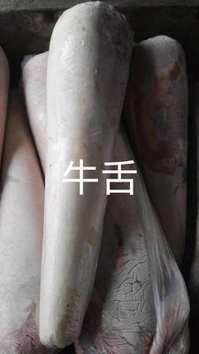 山东省滨州市阳信县牛舌