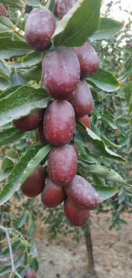 这是一张关于若羌红枣 统货的产品图片