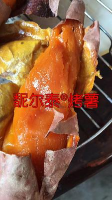 山东省济宁市邹城市烟薯25 红皮 混装通货