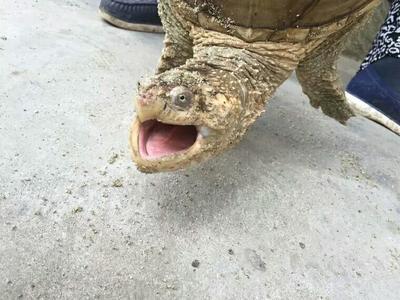 广东省茂名市信宜市龟甲