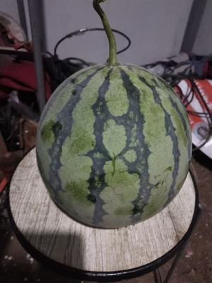 安徽省蚌埠市怀远县美都西瓜 无籽 1茬 8成熟 4斤打底