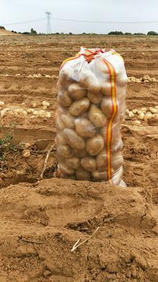 陕西省榆林市定边县226土豆 3两以上