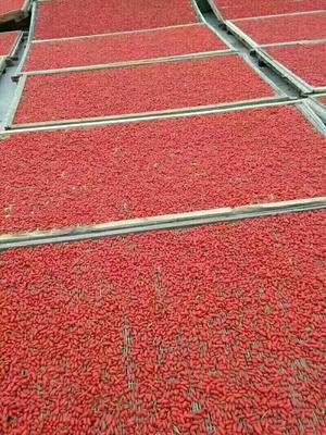 这是一张关于宁夏枸杞 统货的产品图片