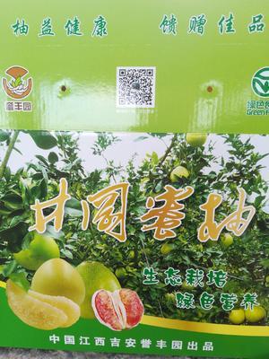 这是一张关于井冈蜜柚 3斤以上的产品图片