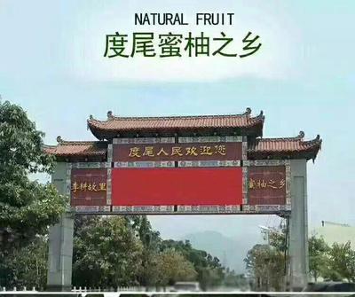 这是一张关于文旦柚 1斤以上的产品图片
