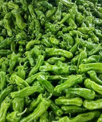这是一张关于芜湖椒 10~15cm 靑色 中辣的产品图片