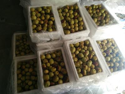 这是一张关于冬枣 直口 40-50g的产品图片