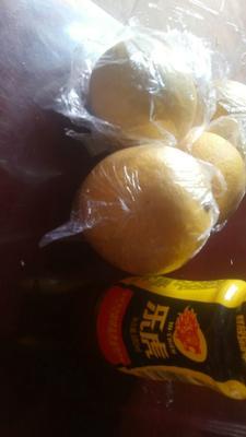 这是一张关于黄柠檬 2 - 2.6两的产品图片