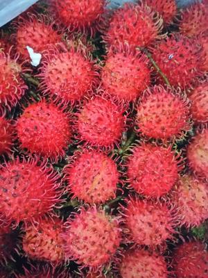 这是一张关于泰国红毛丹 1.5-2cm的产品图片