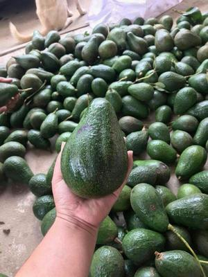 云南省西双版纳傣族自治州景洪市缅甸牛油果 200g以上