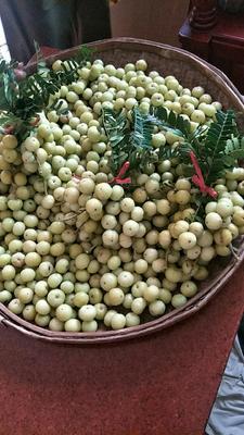 广东省揭阳市普宁市甜种 2cm以上