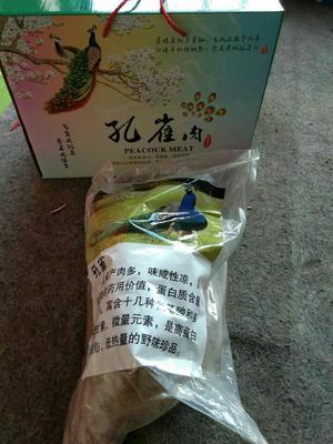 吉林省长春市绿园区孔雀蓝山鸡 2-3斤