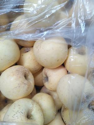 山东省烟台市招远市红富士苹果 纸袋 黄色 75mm以上