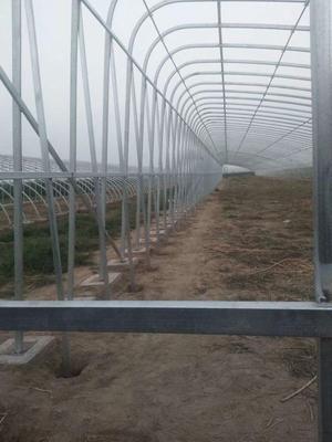 天津静海县钢管大棚