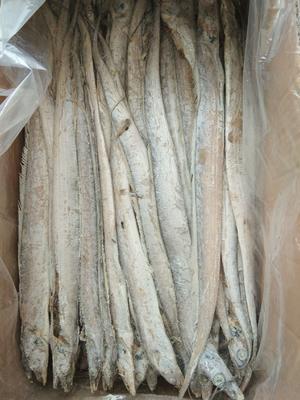 山东省济南市历城区舟山带鱼 野生 0.5公斤以下