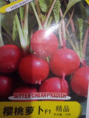 这是一张关于樱桃萝卜种子 良种的产品图片