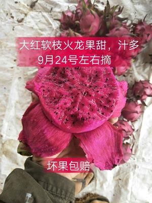 广西壮族自治区南宁市西乡塘区软枝大红火龙果 大(7两以上)