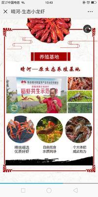 这是一张关于湖南南县小龙虾 塘虾 4-6钱的产品图片