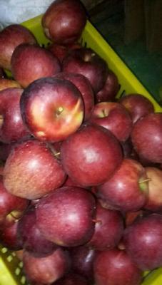 这是一张关于花牛苹果 光果 条红 70mm以上的产品图片