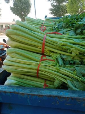 陕西省榆林市靖边县西芹 60cm以上 大棚种植 0.5斤以下
