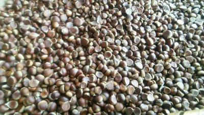 这是一张关于野生板栗 特级 珍珠栗的产品图片