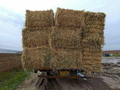 这是一张关于稻草的产品图片