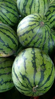 江苏省常州市钟楼区京欣西瓜 有籽 1茬 8成熟 10斤打底