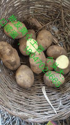 这是一张关于黄心土豆 4两以上的产品图片