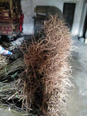 这是一张关于吴茱萸的产品图片