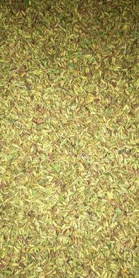 这是一张关于金铁锁种子的产品图片