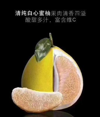 这是一张关于平和蜜柚 1.5斤以上的产品图片