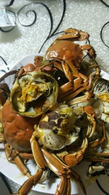 湖北省武汉市洪山区洪湖螃蟹 2.5-3.0两 公蟹
