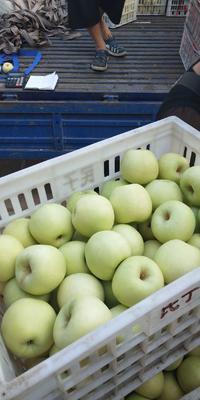 这是一张关于青苹果 纸袋 翠绿 75mm以上的产品图片