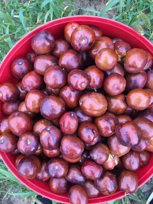 这是一张关于青枣 直口 10-20g的产品图片