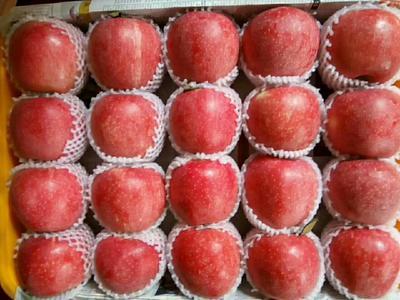这是一张关于昭通苹果 光果 全红 80mm以上的产品图片
